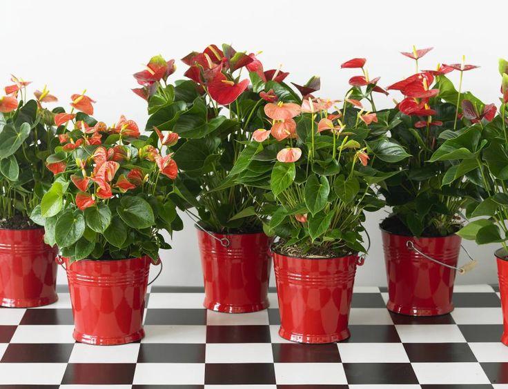 Многообразие расцветок мужского счастья