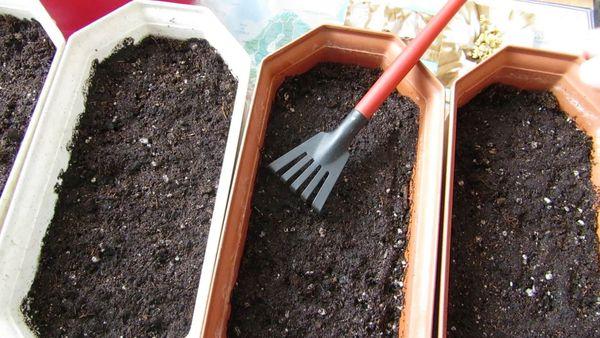 Посев семян в ящики