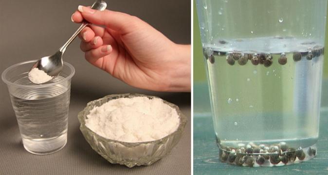 Проверка всхожести семян в солевом растворе