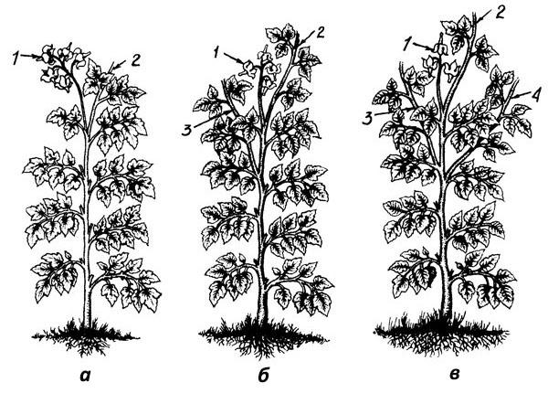 Способы формирования и пасынкования томата